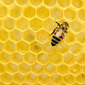 Data-hive